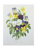 Bouquet of Pansies, Engraved by Victor, from 'Choix Des Plus Belles Fleurs', 1827 Giclee Print by Pierre-Joseph Redouté