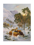 Highland Cattle in a Winter Landscape Giclee Print by Charles Watson