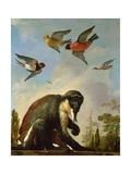 Chained Monkey in a Landscape Giclee Print by Melchior de Hondecoeter