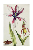 Orchid, Tulip and Butterfly, C.1675 Giclee Print by Nicolas Robert