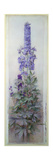 Delphiniums Giclee Print by James Valentine Jelley