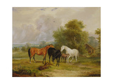 Horses Grazing: Mares and Foals in a Field Giclee Print by Francis Calcraft Turner