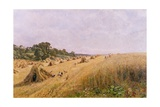Cornfield Harvest Giclee Print by Edward Wilkins Waite