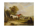 Horses Grazing: a Grey Stallion Grazing with Mares in a Meadow Giclee Print by Francis Calcraft Turner