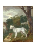 """Bumper"", a Bull Terrier, 1745 Giclee Print by Thomas Gainsborough"