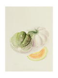 The Romana Melon, 1818 Giclee Print by William Hooker