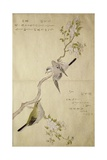 P.332-1946 Vol.1 F.2 Tit on a Bough on the Right and a Bush-Warbler on a Branch on the Left, from… Giclee Print by Kitagawa Utamaro