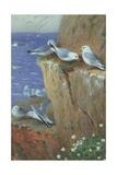 Seagulls Giclee Print by Archibald Thorburn