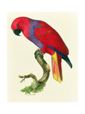 Red Parrot Giclee Print by Jacques Barraband
