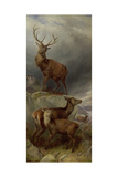 The Deer Forest Giclee Print by Richard Ansdell