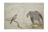 Vol.2 F.1 Falcon on the Right, a Bull-Headed Shrike on the Left, from an Album 'Birds Compared in… Giclee Print by Kitagawa Utamaro