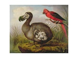 Dodo and Red Parakeet, C.1773 Giclee Print by William Hodges
