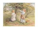Picking Apples Giclee Print by Samuel Mccloy