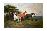 Mares and Foal with a Sheepdog Giclee Print by John Emms