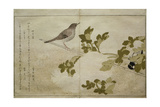 P.332-1946 Vol.2 F.2 Manchurian Great Tit and a Robin, from an Album 'Birds Compared in Humorous… Giclee Print by Kitagawa Utamaro
