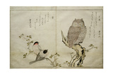 P.332-1946 Vol.2 F.4 an Owl and Two Eastern Bullfinches, from an Album 'Birds Compared in… Gicleetryck av Kitagawa Utamaro