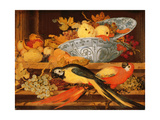 Still Life with Fruit and Macaws, 1622 Giclee Print by Balthasar van der Ast
