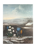 The Snowdrop, Engraved by Ward, Probably Early 19th Century Giclee Print by Abraham Pether