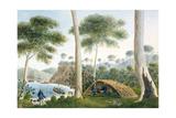 Native Hut (Or Wigwam) of Adventure Bay, Van Dieman's Land, 1792 Giclee Print by Captain George Tobin