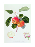 The Trumpington Apple, 1819 Giclee Print by William Hooker