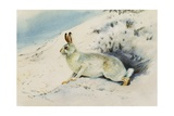 Hare Giclee Print by Archibald Thorburn