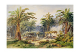 The Fabrication of Palm Oil at Whydah, West Coast of Africa, C.1845 Giclee Print by Edouard Auguste Nousveaux