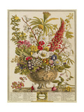 December, from 'twelve Months of Flowers' by Robert Furber (C.1674-1756) Engraved by Henry Fletcher Giclee Print by Pieter Casteels