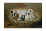 Bitch with Her Puppies in a Wicker Basket Giclee Print by Samuel de Wilde