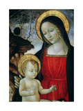 Madonna and Child (Detail) Giclee Print by Bartolomeo Montagna