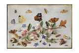 Insects Giclee Print by Jan Van, The Elder Kessel