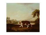 Spanish Pointer Giclee Print by George Stubbs