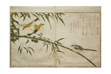 P.332-1946 Vol.2 F.6 Long-Tailed Tit and Three White Eyes, from an Album 'Birds Compared in… Gicleetryck av Kitagawa Utamaro