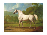 """Mambrino"", C.1790 Giclee Print by George Stubbs"