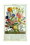 March, from 'The Flower Garden Displayed' by Robert Furber (C.1674-1756), Engraved by James… Giclee Print by Pieter Casteels