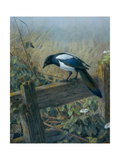The Magpie Giclee Print by Johan Gerard Keulemans