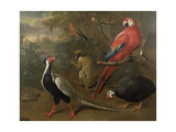 Pheasant, Macaw, Monkey, Parrots and Tortoise Giclee Print by Charles Collins