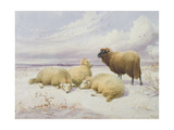 Sheep in the Snow Giclee Print by Thomas Sidney Cooper