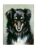 A Black and Tan Collie, 1890 Giclee Print by Robert Morley