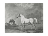 Mambrino, Engraved by George Townley Stubbs (1756-1815) Pub. 1794 Giclee Print by George Stubbs