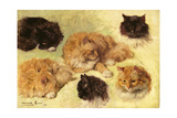 Studies of Cats, 1895 Giclee Print by Henriette Ronner-Knip