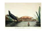 Duck-Billed Platypi of New South Wales, Plate 34 from 'Voyage De Decouvertes Aux Terres… Giclee Print by Charles Alexandre Lesueur
