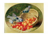 Bluetits Pecking at Cherries, 1897 Giclee Print by Eloise Harriet Stannard