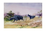 T.952 John Sawing's Narrow Escape from Being Run Down by a Couple of Rhinoceros, North of the… Giclee Print by Thomas Baines