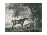 Sharke, Engraved by George Townley Stubbs (1756-1815) Pub. 1794 Giclee Print by George Stubbs