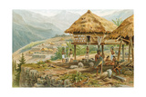 Igorrote Farm in Luzon, Philippines, from 'The History of Mankind', Vol.1, by Prof. Friedrich… Giclee Print by Hans Meyer
