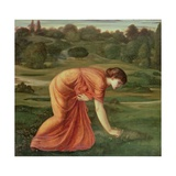 The March Marigold, C.1870 Giclee Print by Sir Edward Coley Burne-Jones