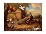 Peacocks and Other Birds by a Lake Giclee Print by Melchior de Hondecoeter