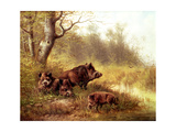 Wild Boar in the Black Forest, 1880 Giclee Print by Moritz Muller