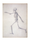 The Human Skeleton Giclee Print by George Stubbs