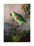 A Parrot Giclee Print by Jakob Bogdani Or Bogdany